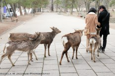 Crazy deer! Todai-ji Temple, Nara, Japan.